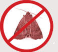 Pest Control Colchester - Clothes Moths